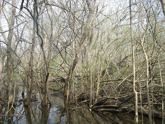 swamp-2036a.jpg