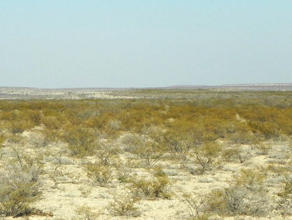 Example Trans Pecos Creosotebush Scrub.jpg