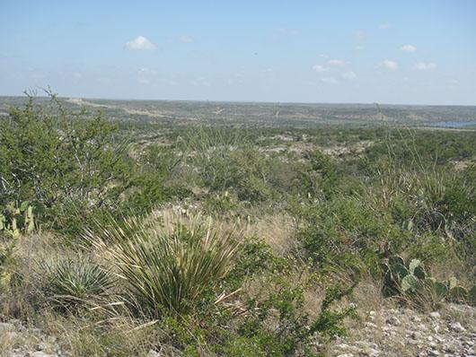 trans-pecos-mixed desert and thornscrub-653.jpg