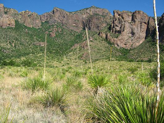trans pecos-succulent desert scrub-59.jpg
