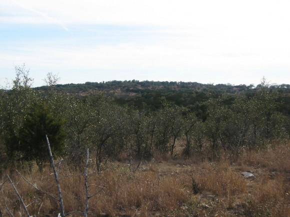 Example Edwards Plateau Ashe Juniper/Live Oak Shrubland.jpg