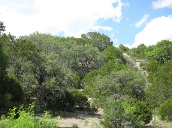 Example Edwards Plateau Ashe Juniper/Live Oak Slope Shrubland.jpg