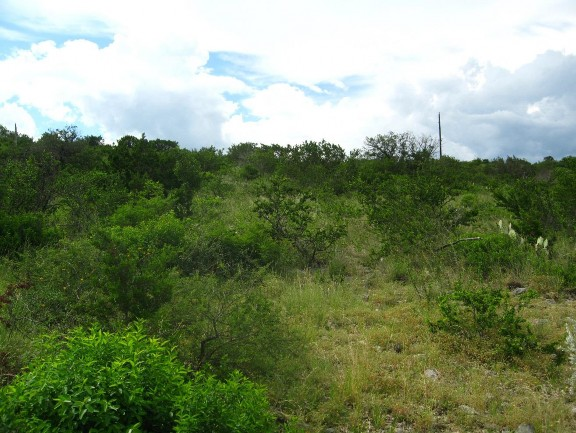 Example Edwards Plateau Deciduous Semi-arid Slope Shrubland.jpg
