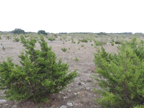Example Edwards Plateau Juniper Semi-arid Shrubland.jpg