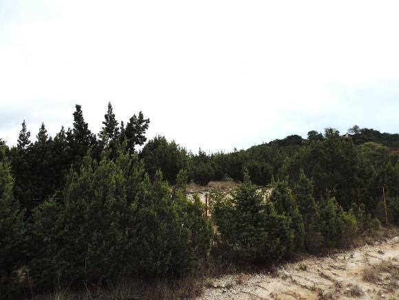 Example Edwards Plateau Juniper Semi-arid Slope Shrubland.jpg