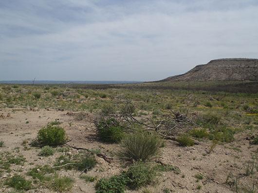 edwards plateau-savanna grassland-074.jpg