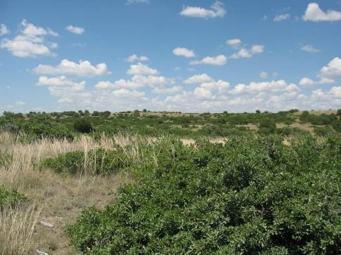 Example Edwards Plateau Shin Oak Shrubland.jpg