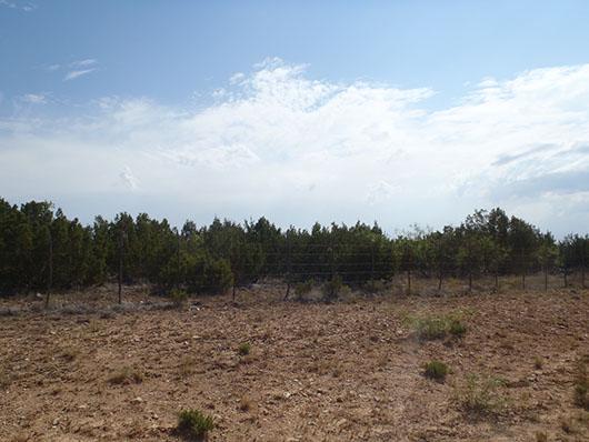 rolling plains-breaks juniper shrubland-1547.jpg
