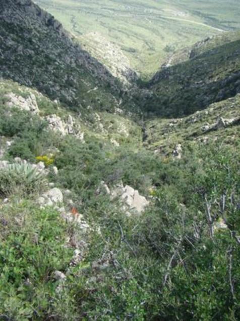 Example Trans-Pecos: Deciduous Chaparral.jpg