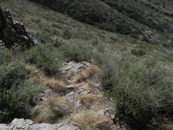 Example Trans-Pecos: Evergreen Chaparral.jpg