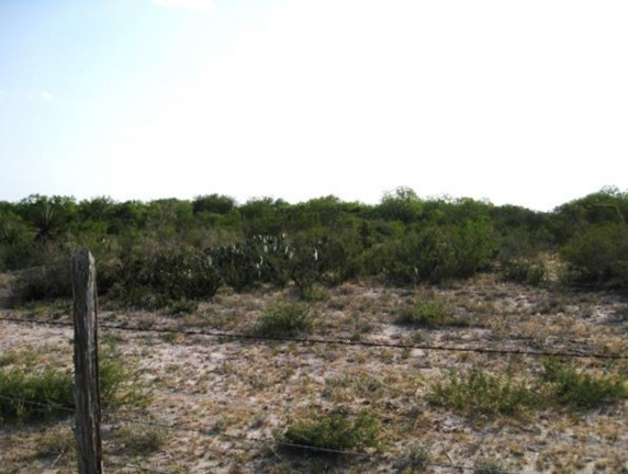 Example South Texas Shallow Shrubland.jpg