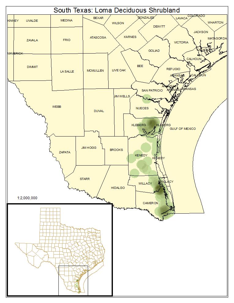 South Texas: Loma Deciduous Shrubland
