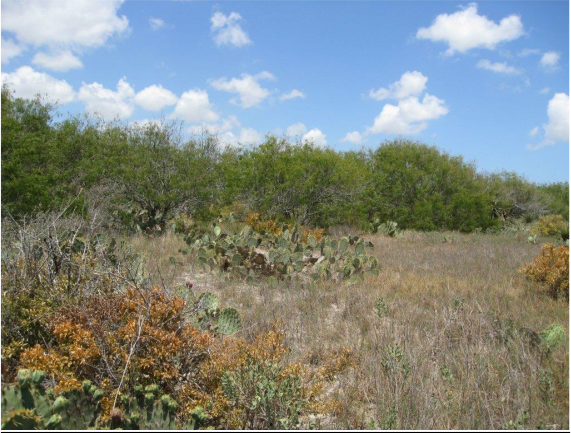 Example South Texas Loma Deciduous Shrubland.png
