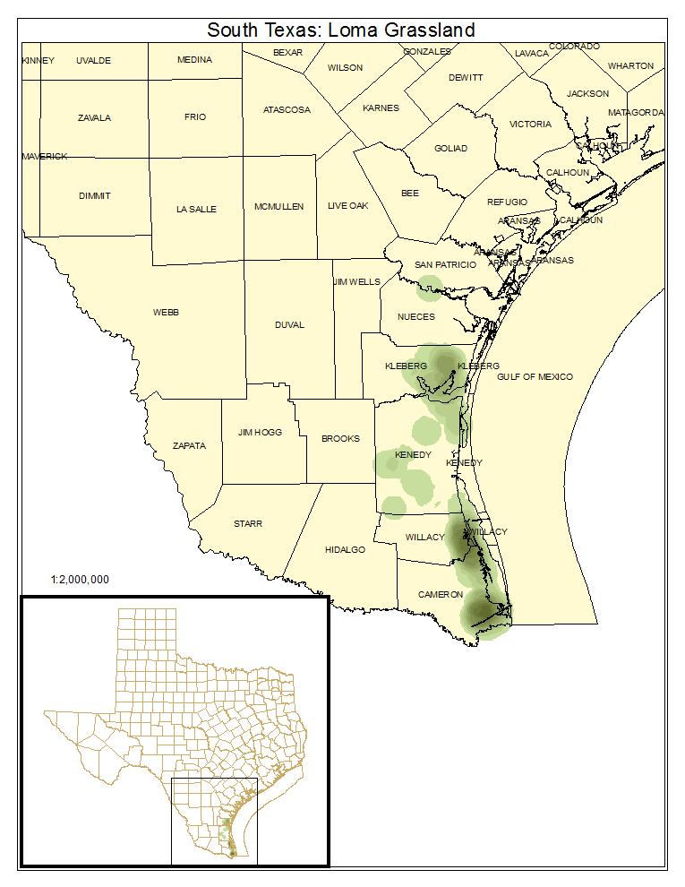 South Texas: Loma Grassland