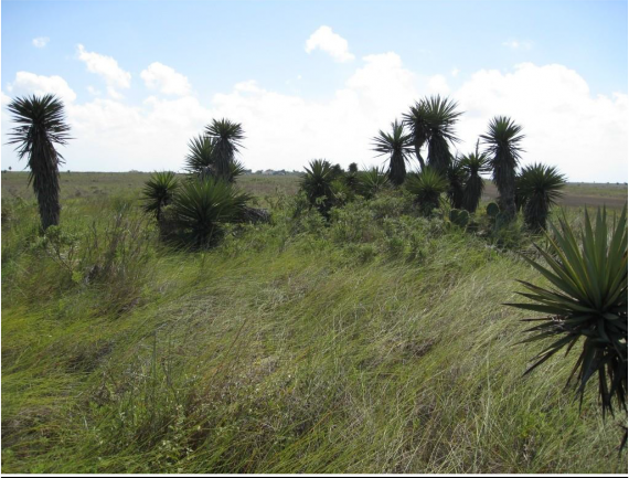 Example South Texas Loma Grassland.png