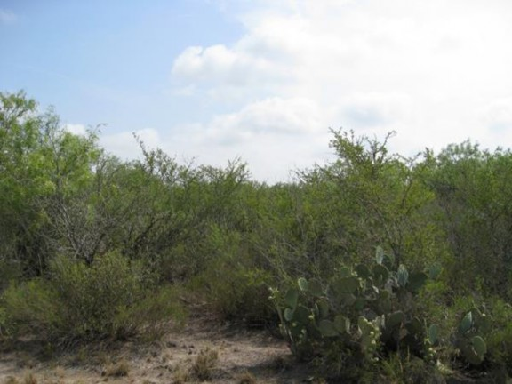 Example South Texas: Clayey Blackbrush Mixed Shrubland.jpg