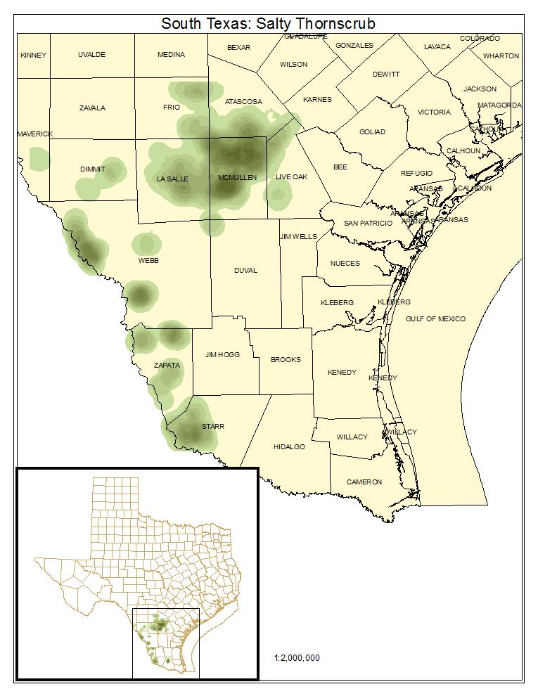 South Texas: Salty Thornscrub