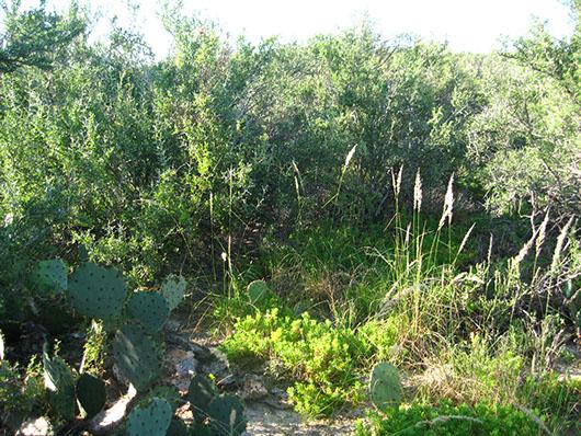south texas-salty thornscrub-557.jpg