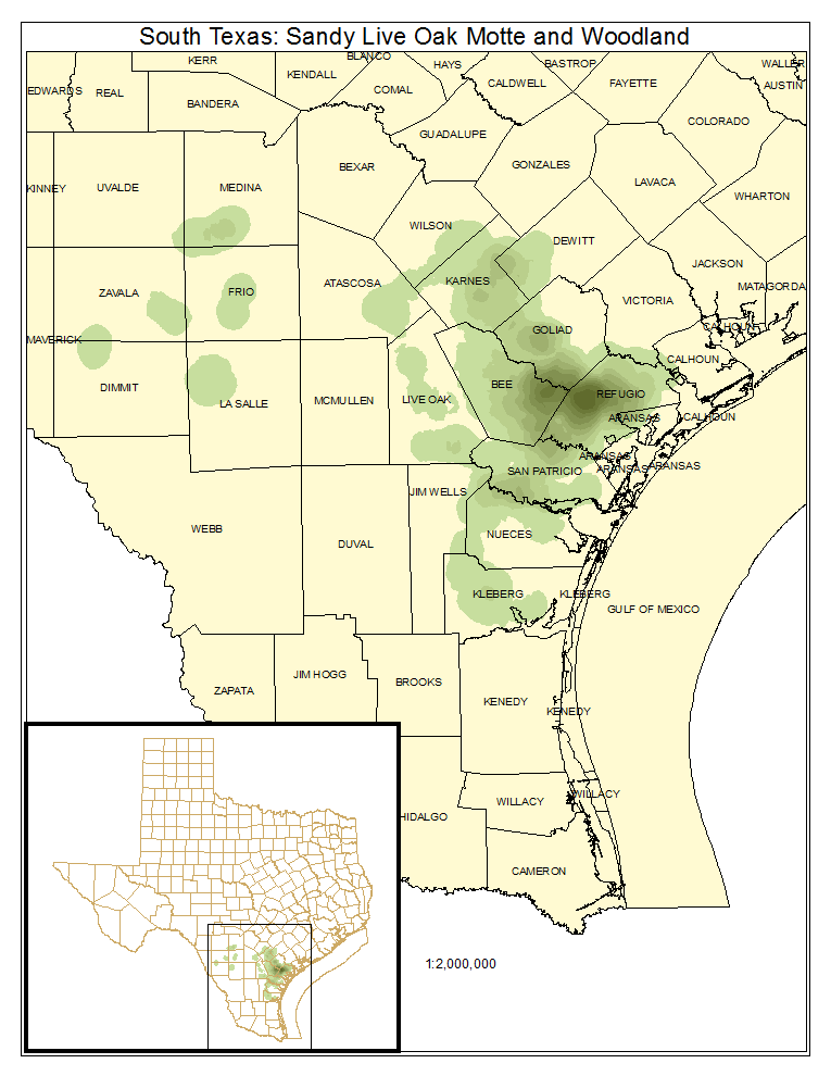 South Texas: Sandy Live Oak Motte and Woodland