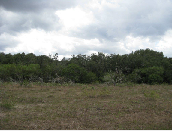 Example South Texas Sandy Live Oak Motte and Woodland.png
