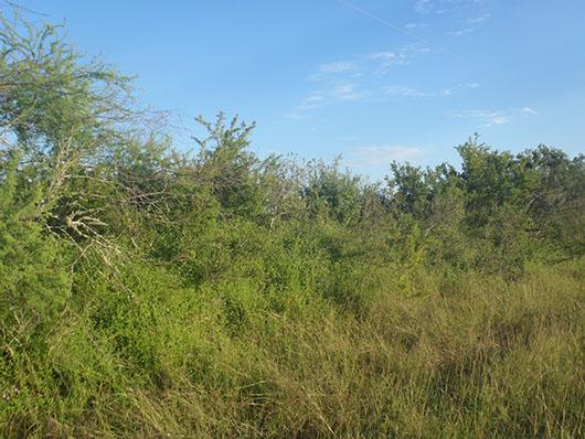 south texas-sandy mesquite dense shrubland-912.jpg