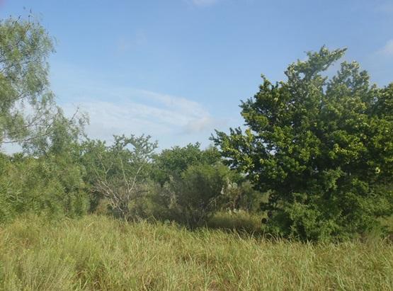 south texas-sandy mesquite-evergreen woodland-763 (2).jpg