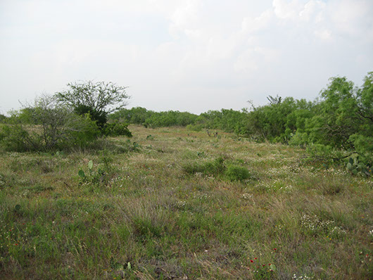Tamaulipan Savanna Grassland Texas Parks Amp Wildlife