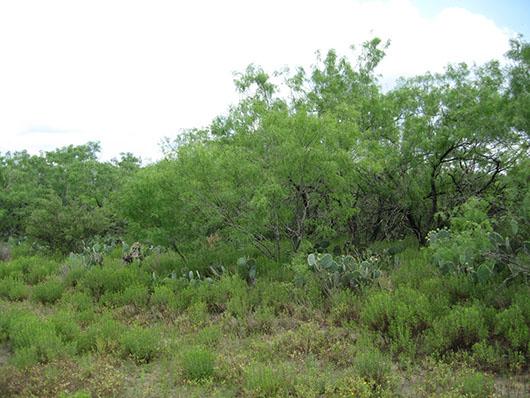 south texas-sandy mesquite woodland and shrubland-108.jpg