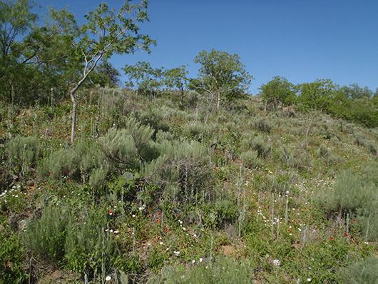 high plains-sandhill deciduous shrub duneland-358.jpg