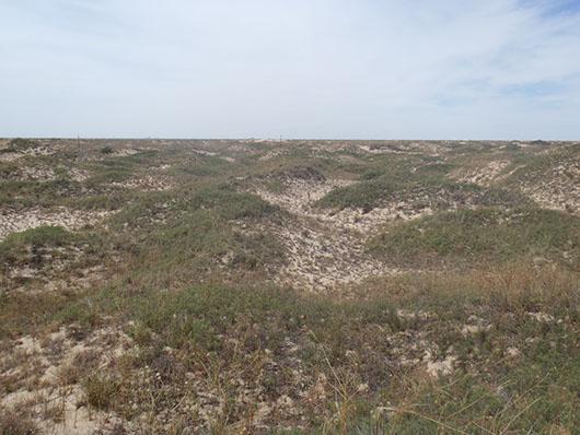 high plains-sandhill shinnery duneland-227.jpg