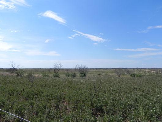 high plains-sandy shinnery shrubland-1021.jpg