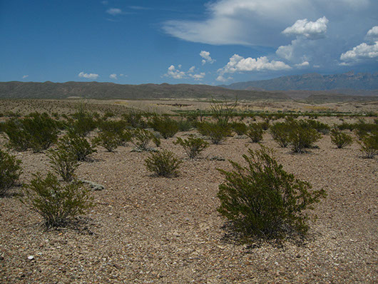trans pecos-pavement desert-19.jpg