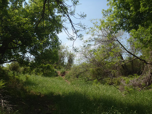 central texas-wooded cliff-bluff-316.jpg