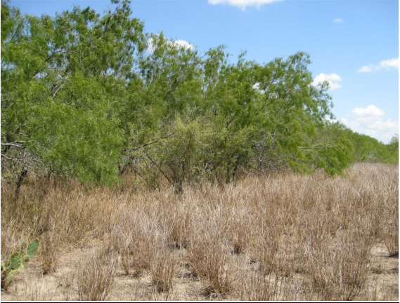 Example South Texas: Saline Lake Grassland.png