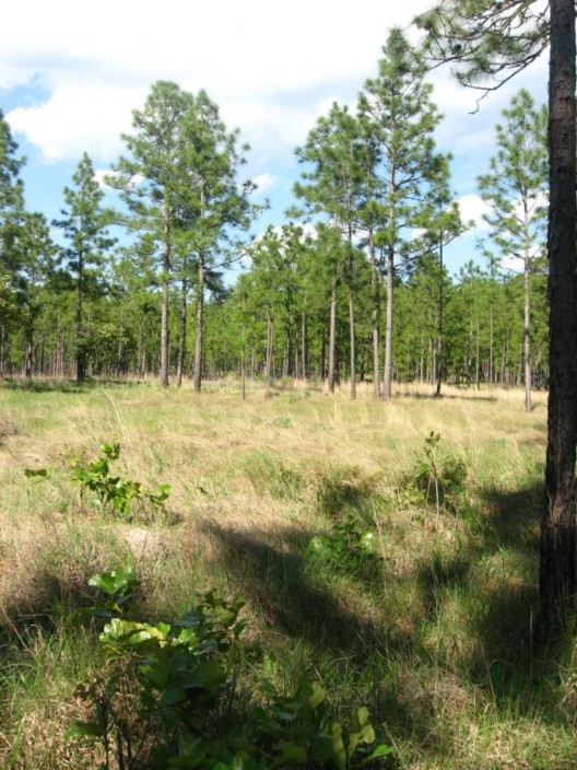 Example West Gulf Coastal Plain Catahoula Barrens.jpg