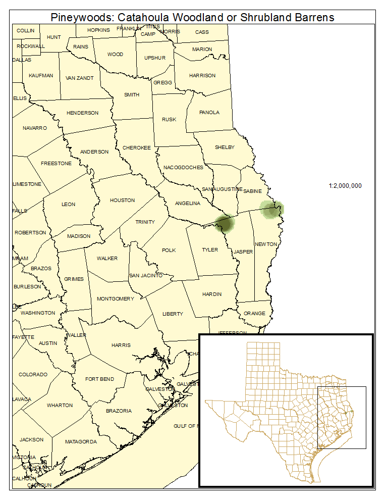 Pineywoods: Catahoula Woodland and Shrubland Barrens