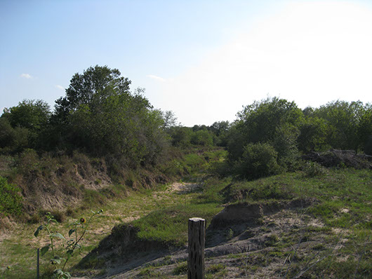 coastal bend-riparian deciduous shrubland-627.jpg