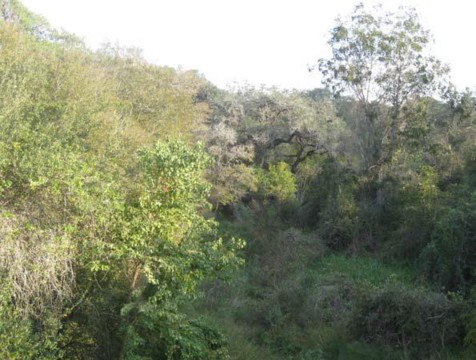 Example Coastal Bend: Riparian Live Oak/Hardwood Forest.jpg