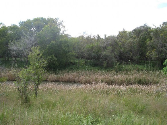 Example Coastal Bend: Floodplain Herbaceous Wetland.jpg