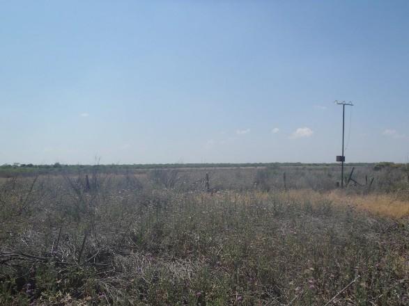Example Edwards Plateau: Floodplain Herbaceous Wetland.jpg