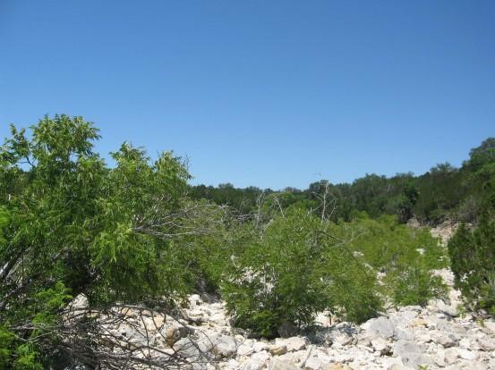 Example Edwards Plateau: Riparian Deciduous Shrubland.jpg