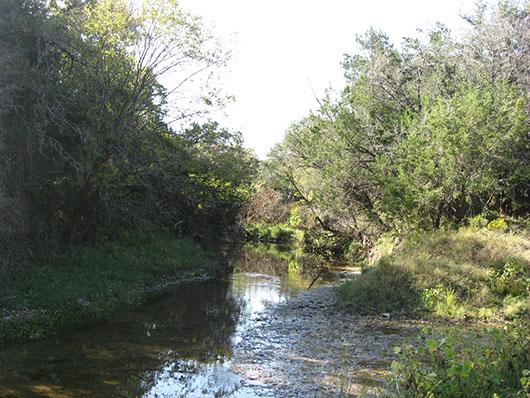 epriparian_hardwood_juniper_forest_site138.jpg