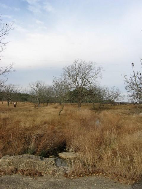 Edwards Plateau Riparian Texas Parks Amp Wildlife Department
