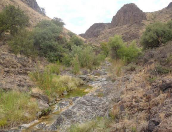 Example Trans-Pecos: Lower Montane Riparian Shrubland.jpg