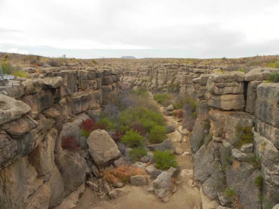 Example Trans-Pecos: Riparian Shrubland.jpg