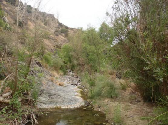 Example Trans-Pecos: Riparian Woodland.jpg