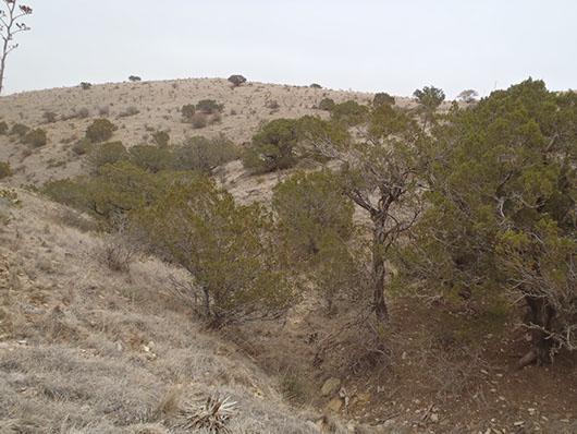 trans pecos-desert wash evergreen shrubland-1730.jpg