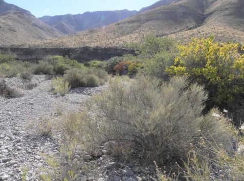 Example Trans-Pecos: Desert Wash Shrubland.jpg