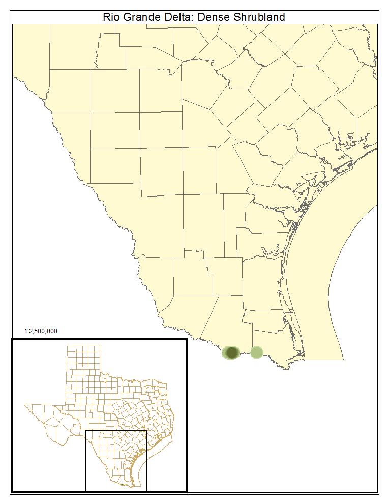 Rio Grande Delta: Dense Shrubland