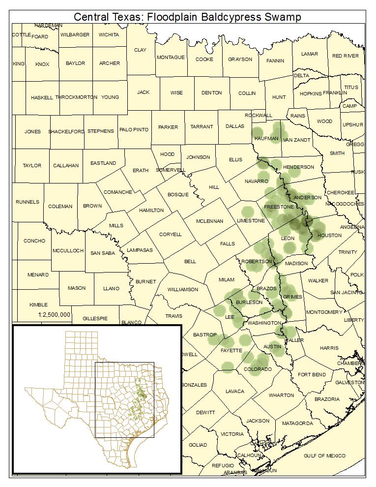 Central Texas: Floodplain Baldcypress Swamp